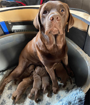 Prinny and her puppies